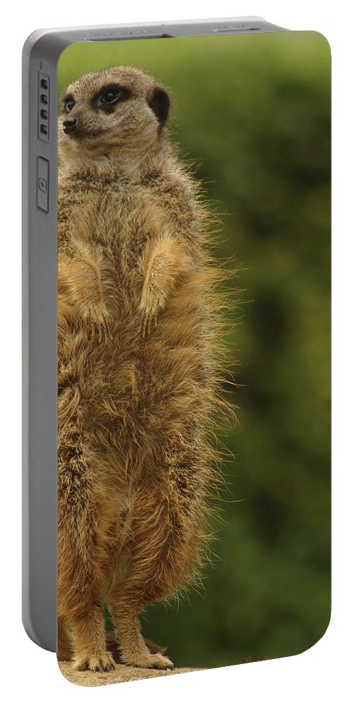 Meercat Portable Battery Charger featuring the photograph Meercat by Ian Middleton