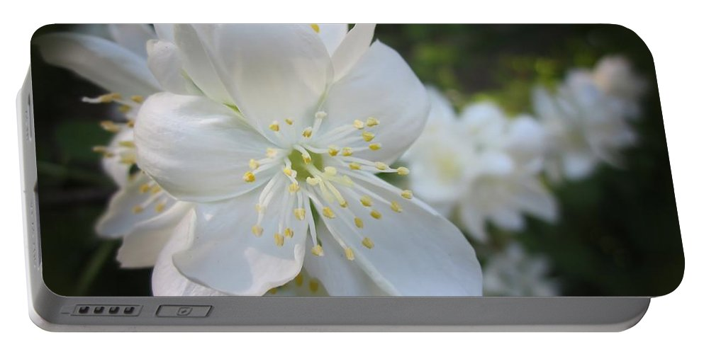 Flowers Portable Battery Charger featuring the photograph Mock Orange Blossoms by MTBobbins Photography