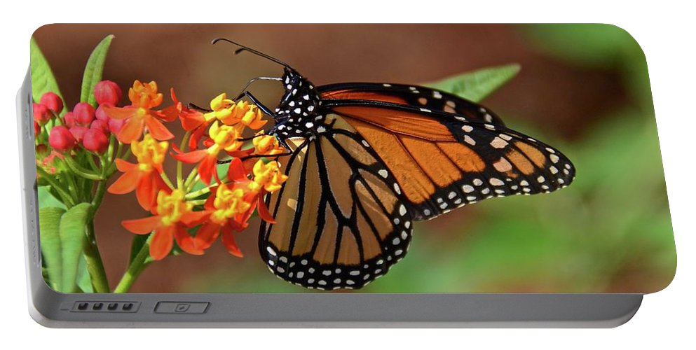 Monarch Portable Battery Charger featuring the photograph Monarch On Milkweed by Carol Bradley