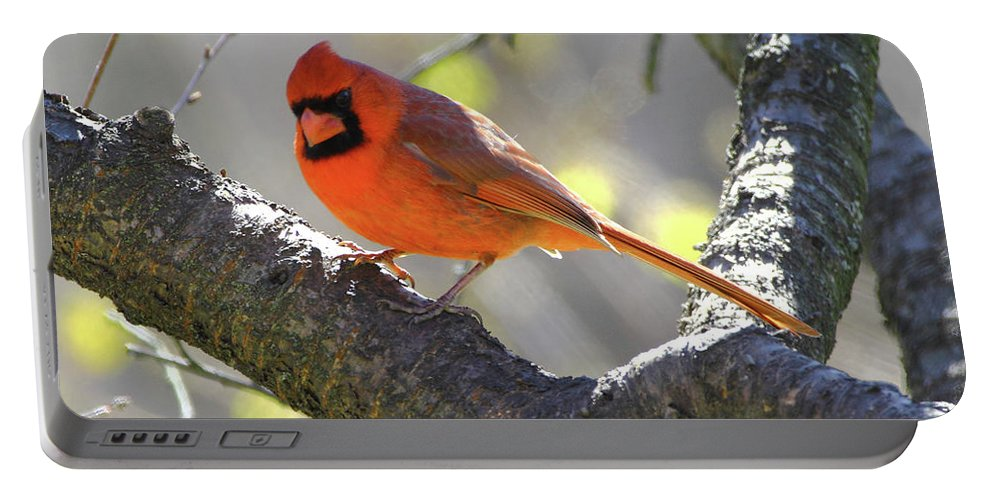 Northern Cardinal Portable Battery Charger featuring the photograph Mr Northern Cardinal by Herbert L Fields Jr