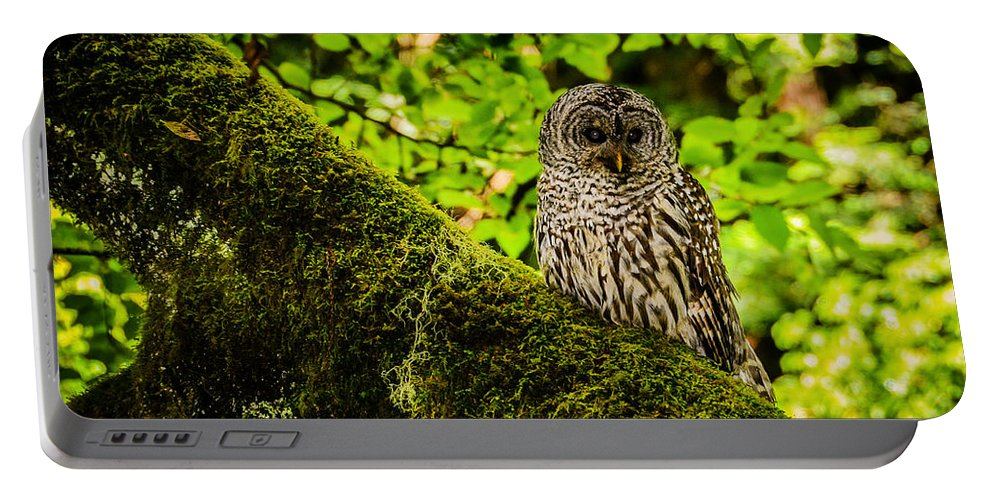 Muir Woods Photography Portable Battery Charger featuring the photograph Muir Woods Owl by La Rae Roberts