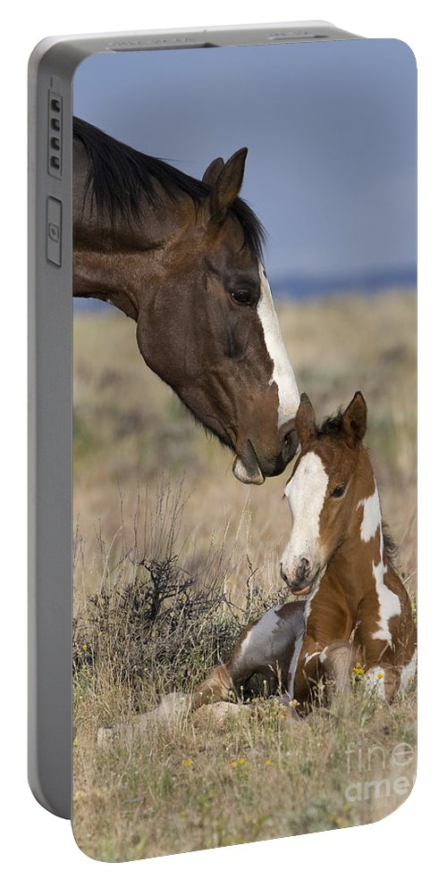 Horse Portable Battery Charger featuring the photograph Mustang Mare And Foal by Jean-Louis Klein & Marie-Luce Hubert