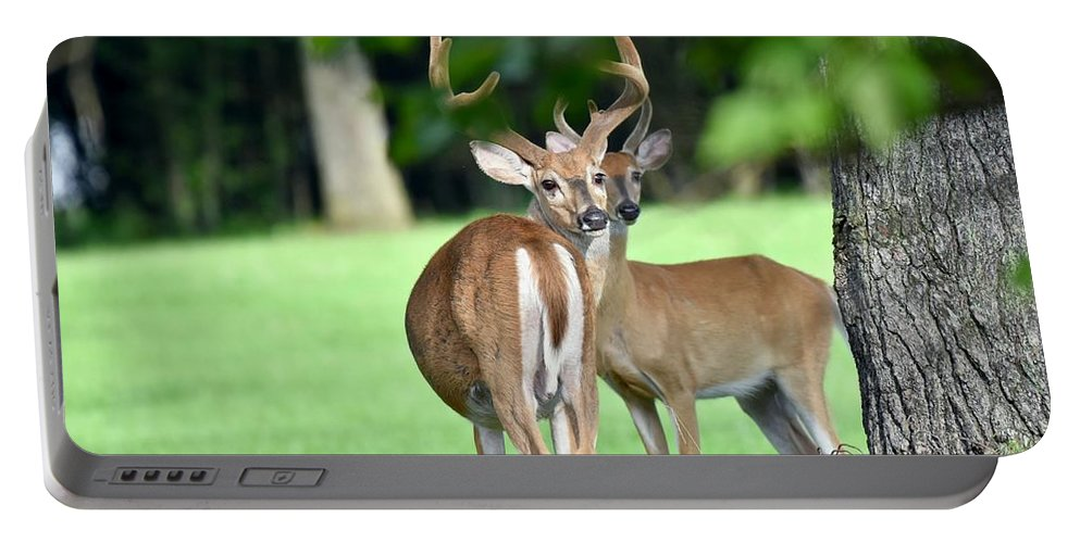Wilderness Portable Battery Charger featuring the photograph Never Look Back by Jeramey Lende