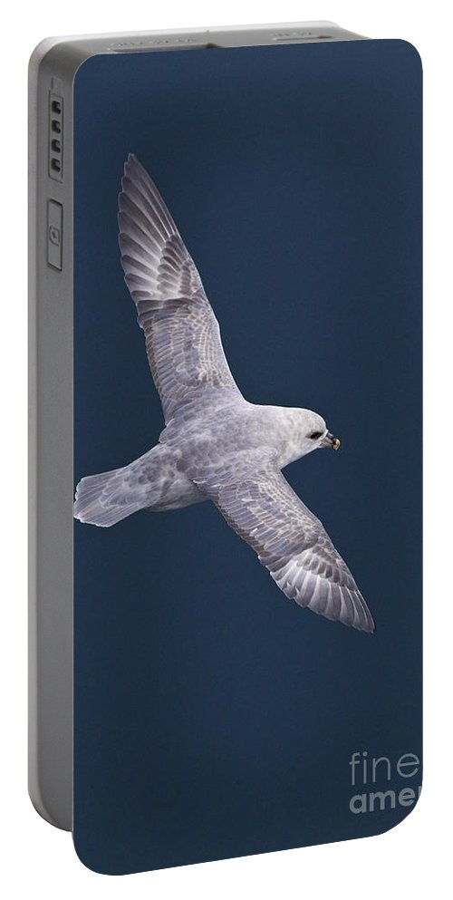 Northern Fulmar Portable Battery Charger featuring the photograph Northern Fulmar by Jean-Louis Klein & Marie-Luce Hubert