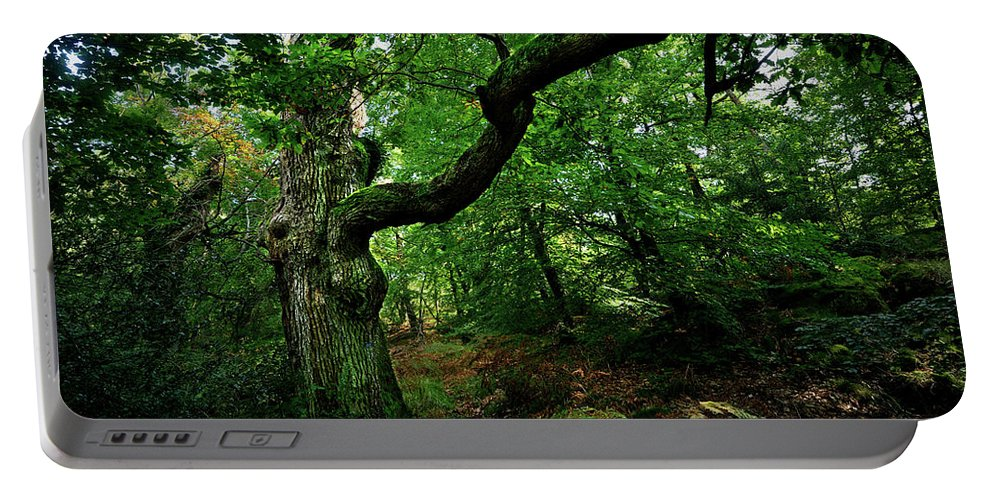 Nature Portable Battery Charger featuring the photograph Old Oak by Olivier Blaise