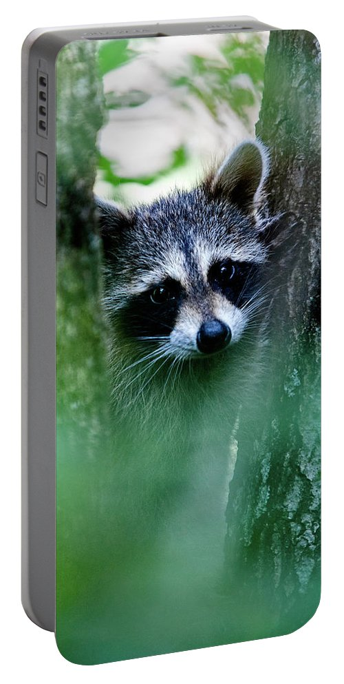 Racoon Portable Battery Charger featuring the photograph On Watch by Christopher Holmes