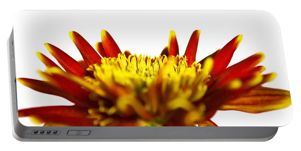 Flower Portable Battery Charger featuring the photograph One Flower by Svetlana Sewell