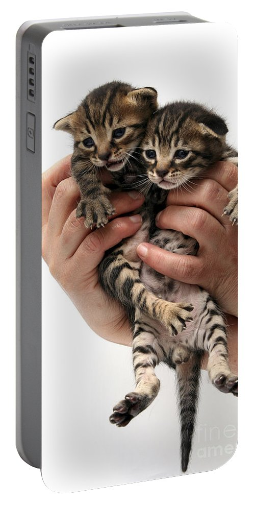 Cat Portable Battery Charger featuring the photograph One Week Old Kittens by Yedidya yos mizrachi