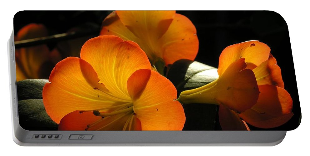Flower Portable Battery Charger featuring the photograph Translucent by Karen Dickinson