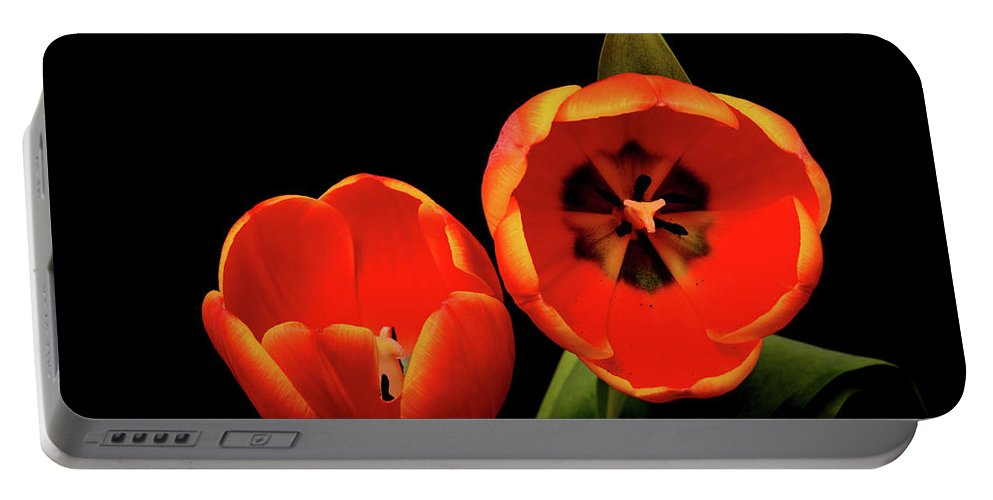 Tulip Portable Battery Charger featuring the photograph Orange Tulip Macro by Paul Moore