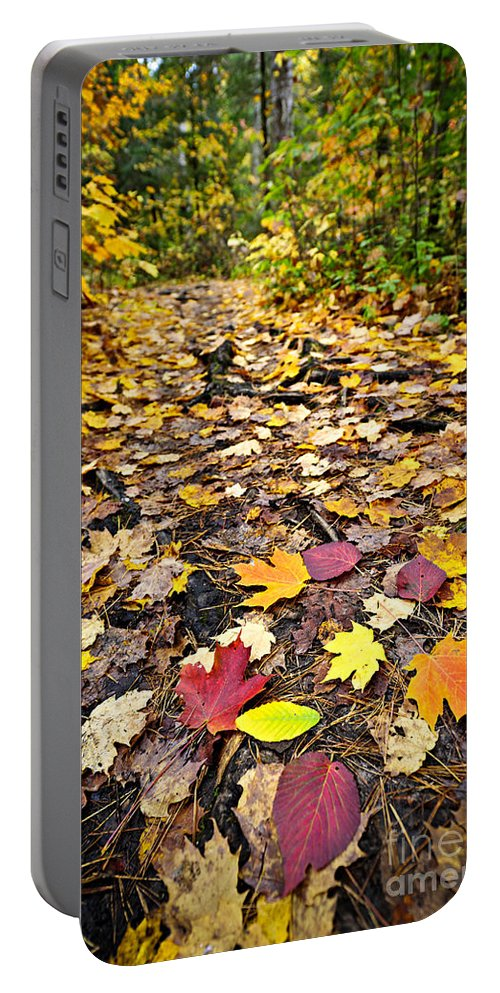 Autumn Portable Battery Charger featuring the photograph Path In Fall Forest by Elena Elisseeva