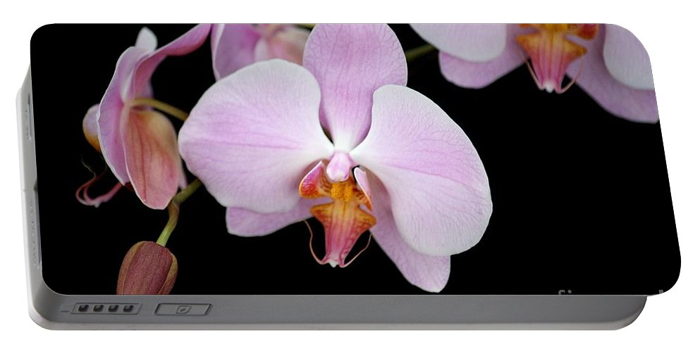 Beauty Portable Battery Charger featuring the photograph Pink Orchid Vii by Ralf Broskvar