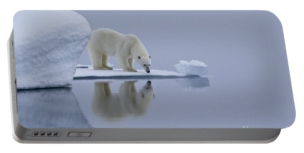 Polar Bear Portable Battery Charger featuring the photograph Polar Bear In Svalbard by Jean-Louis Klein & Marie-Luce Hubert