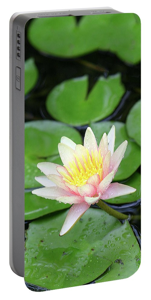 Lily Portable Battery Charger featuring the photograph Pretty In Pink by Shari Jardina