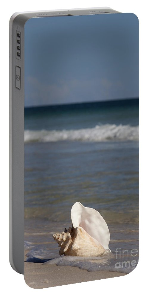 Queen Conch Portable Battery Charger featuring the photograph Queen Conch On The Beach by Anthony Totah