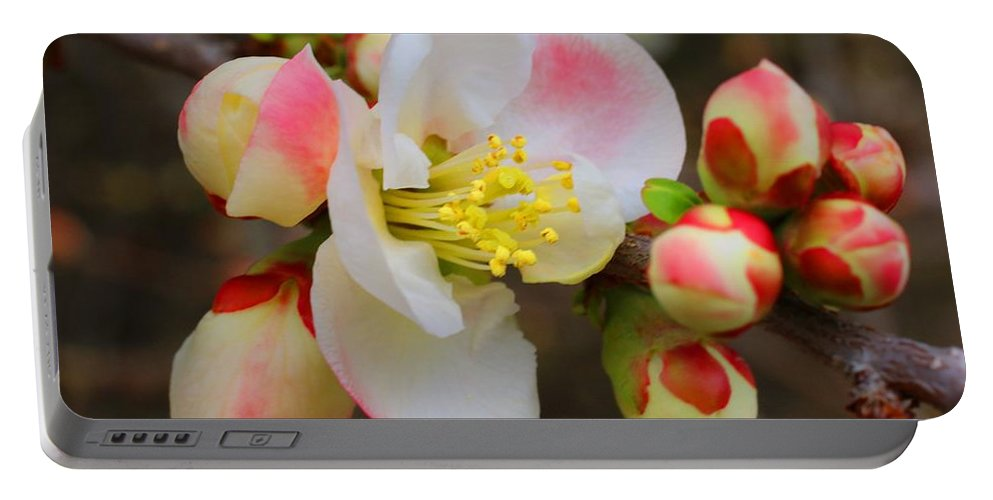 Quince Portable Battery Charger featuring the photograph Quince Toyo-nishiki by Kathryn Meyer