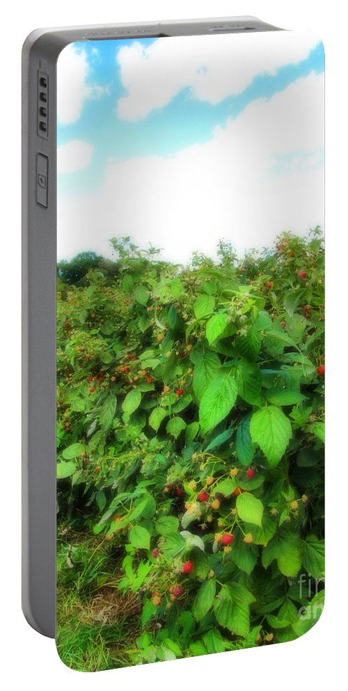 Raspberries Portable Battery Charger featuring the photograph Raspberry Fields 2 by September Stone