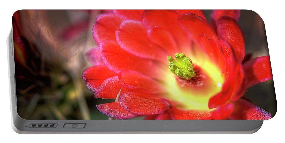 Arizona Portable Battery Charger featuring the photograph Red Hedgehog by Saija Lehtonen