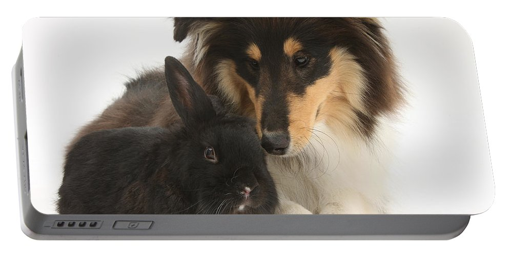 Fauna Portable Battery Charger featuring the photograph Rough Collie With Black Rabbit by Mark Taylor