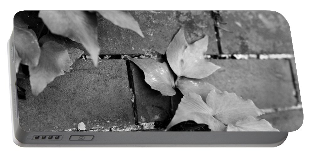 Savannah Portable Battery Charger featuring the photograph Savannah Wall by For Ninety One Days