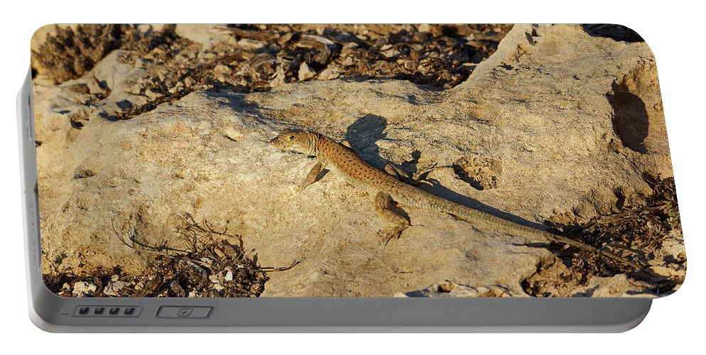 Agia Napa Portable Battery Charger featuring the photograph Schreiber's Fringe-fingered Lizard by Jouko Lehto