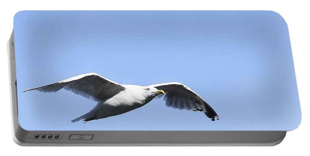 Bird Portable Battery Charger featuring the photograph Seagull by Svetlana Sewell