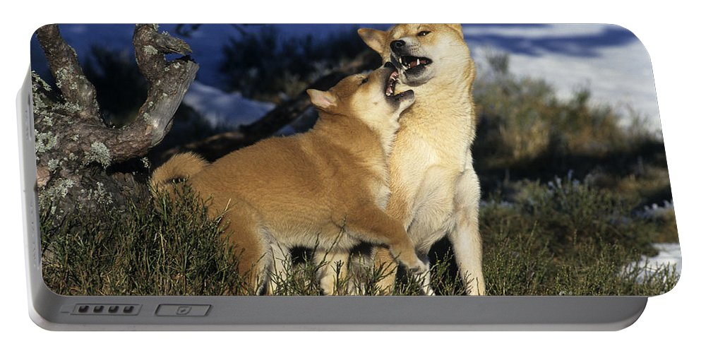 Shiba Inu Portable Battery Charger featuring the photograph Shiba Inu And Her Puppy by Jean-Louis Klein & Marie-Luce Hubert