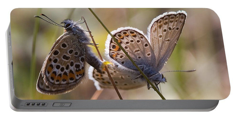 Butterfly Portable Battery Charger featuring the photograph Silver-studded Blue Butterflies by Bob Kemp