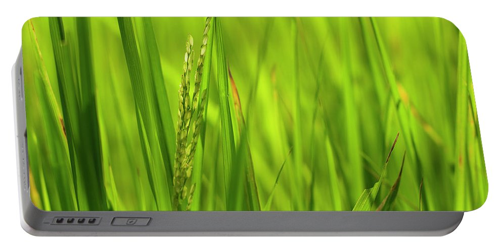Agriculture Portable Battery Charger featuring the photograph Skn 2913 Yet To Collect The Yield Color by Sunil Kapadia