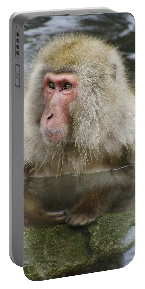Snow Monkey Portable Battery Charger featuring the photograph Snow Monkey Bath by Michele Burgess