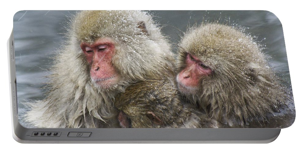 Snow Monkey Portable Battery Charger featuring the photograph Snuggling Snow Monkeys by Michele Burgess