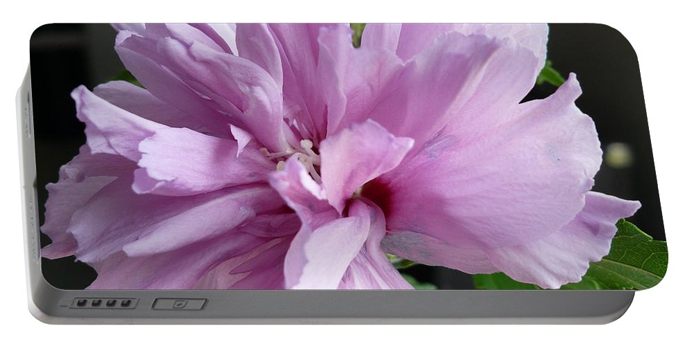 Phoyography.hibiscus Flower Floral Bloom Bush Pink Portable Battery Charger featuring the photograph So Pink by Karin Dawn Kelshall- Best