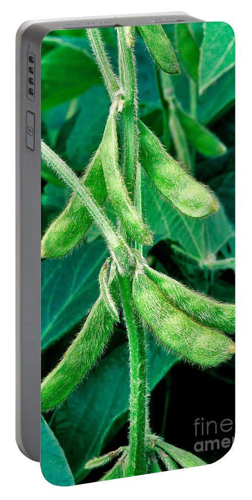 Soybeans Portable Battery Charger featuring the photograph Soybeans by Inga Spence