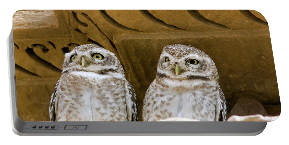 Spotted Owlet Portable Battery Charger featuring the photograph Spotted Owlets by Aivar Mikko
