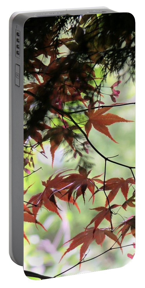 Summer. Leaves. Garden. Field. Spring. Flora. Countryside. Landscape. Flowers. Tree. Portable Battery Charger featuring the photograph Summer Xxi by Nicholas Rainsford