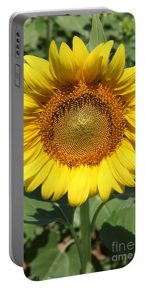 Sunflowers Portable Battery Charger featuring the photograph Sunflower 09 by Amanda Barcon