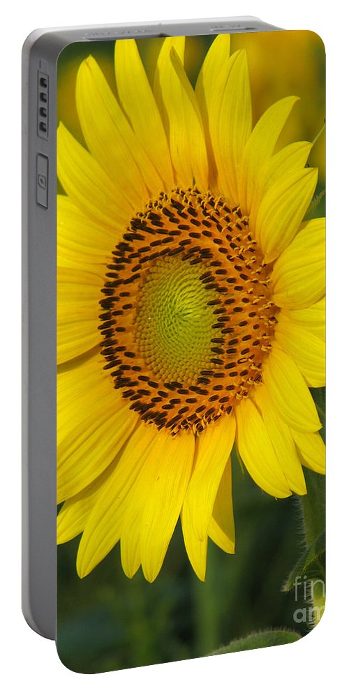Sunflowers Portable Battery Charger featuring the photograph Sunflower by Amanda Barcon