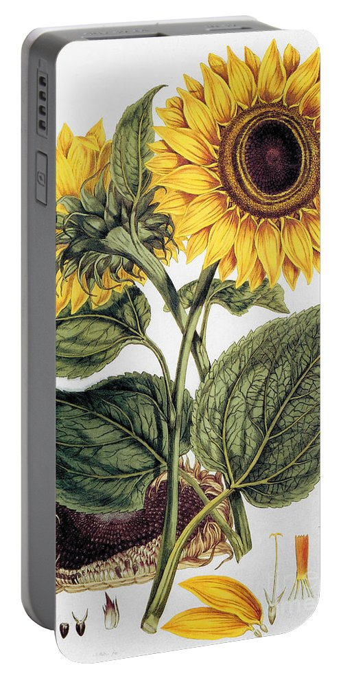 1777 Portable Battery Charger featuring the photograph Sunflower by Granger