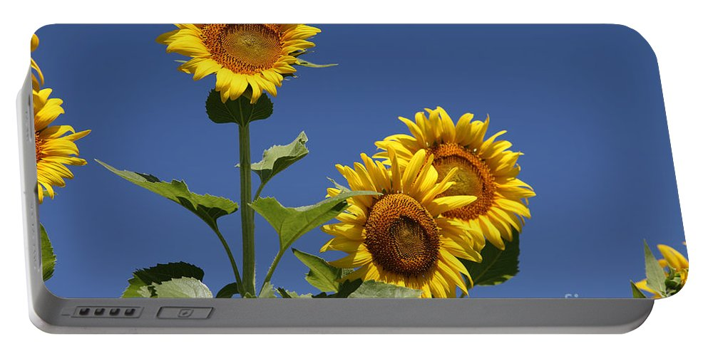 Sunflowers Portable Battery Charger featuring the photograph Sunflowers by Amanda Barcon