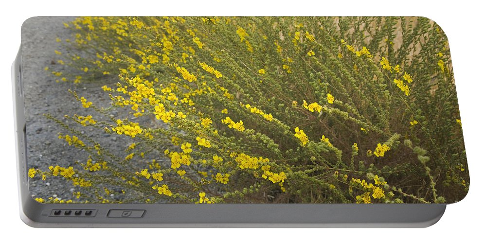 Tarweed Portable Battery Charger featuring the photograph Tarweed Flowering by Inga Spence