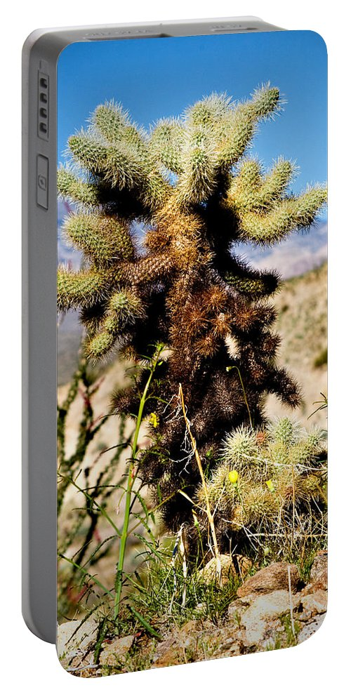 Teddy Bear Cholla Portable Battery Charger featuring the photograph Teddy Bear Cholla by Chris Brannen