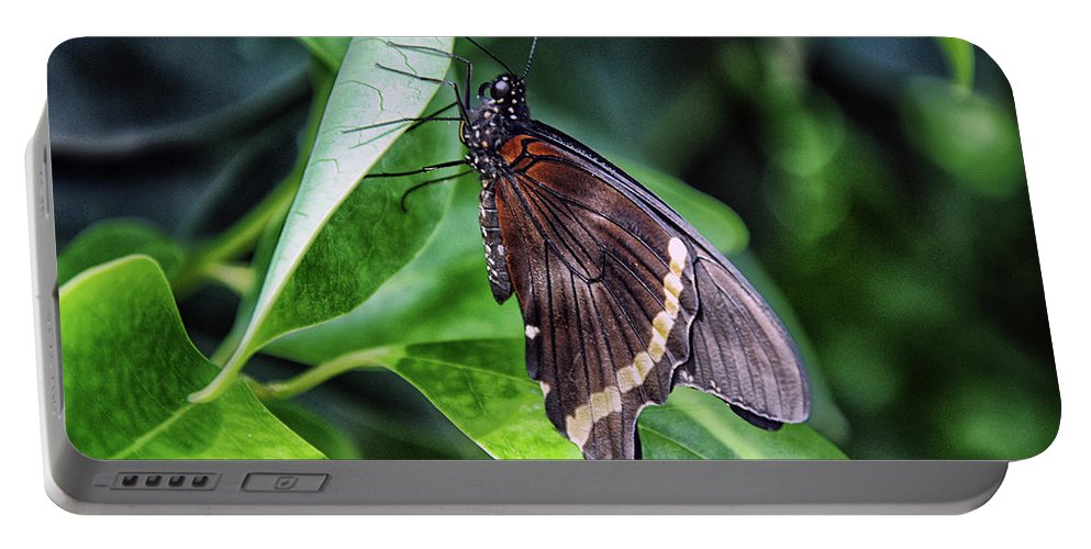 Butterfly Portable Battery Charger featuring the photograph The Butterfly by George Fredericks