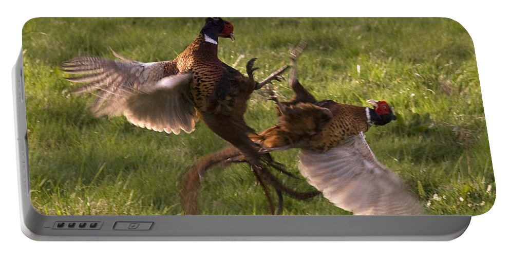 Pheasant Portable Battery Charger featuring the photograph The Sparring by Angel Ciesniarska