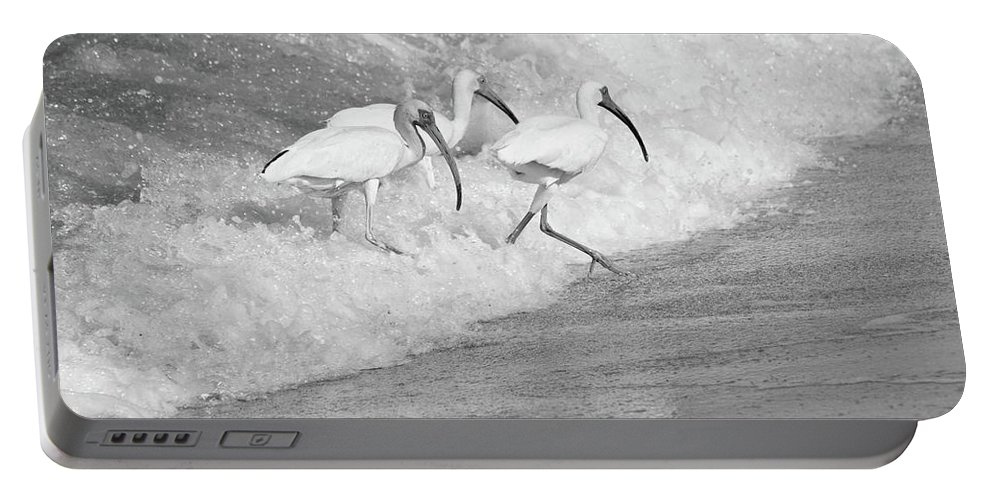 Bird Portable Battery Charger featuring the photograph The Tide Of The Ibises by Jenny Regan