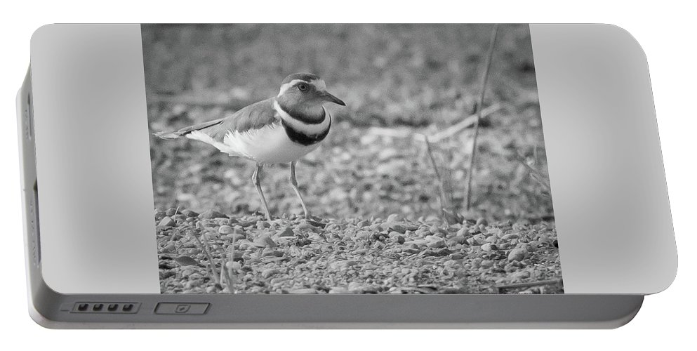 Gariep Portable Battery Charger featuring the photograph Three Banded Plover by Melanie Meyer