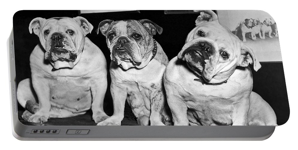 1930s Portable Battery Charger featuring the photograph Three English Bulldogs by Underwood Archives