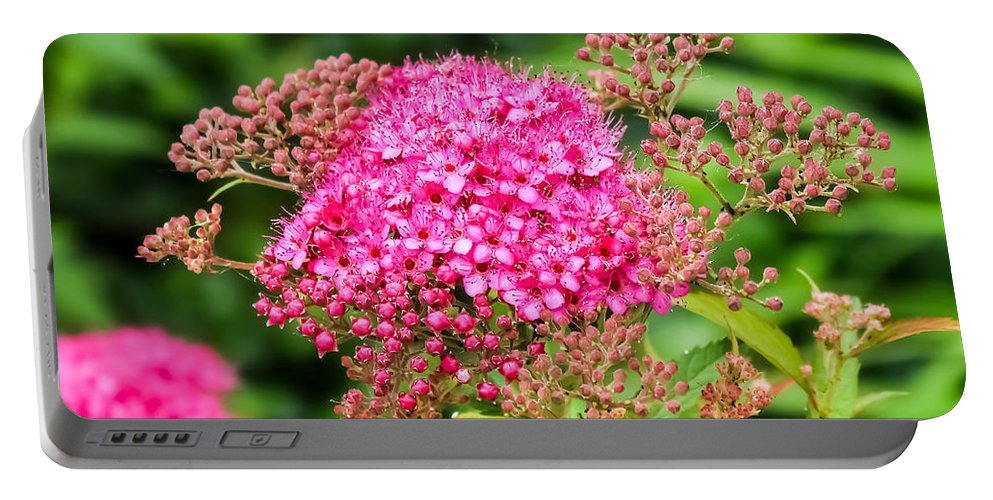 Tiny Pink Spirea Flowers Portable Battery Charger featuring the photograph Tiny Pink Spirea Flowers by Cynthia Woods