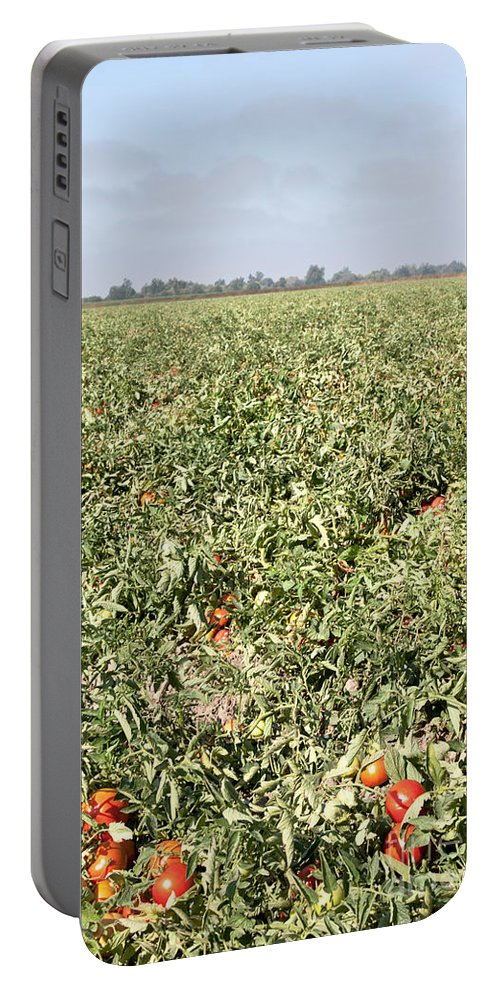 Tomato Portable Battery Charger featuring the photograph Tomato Field, California by Inga Spence
