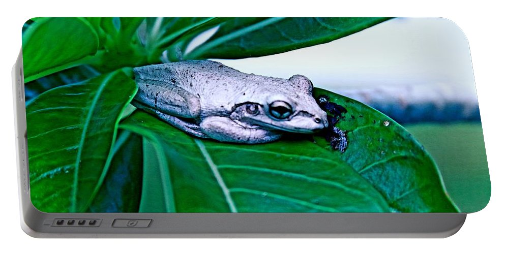 Tree-frog Portable Battery Charger featuring the photograph Tree Frog On Desert Rose by Donald Hazlett
