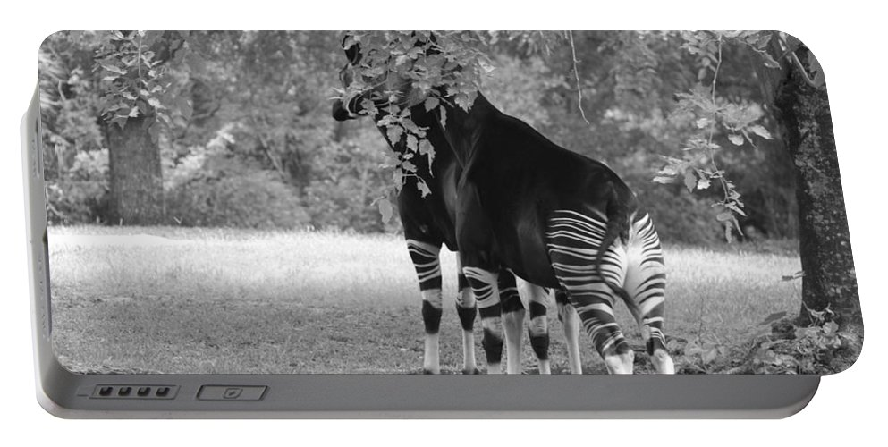 Animal Portable Battery Charger featuring the photograph Two Stripers by Rob Hans